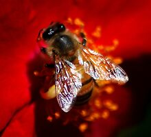A Honeybee on Red Rose by loiteke