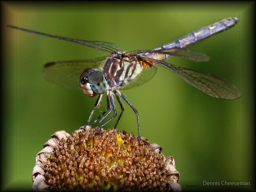 Dragonfly by Dennis Cheeseman