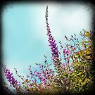 Hedgerow fox gloves by sue mochrie