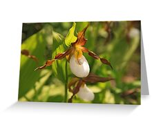 Mountain Lady's Slipper Greeting Card