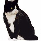 Sylvester by Lindabloomfield