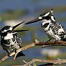 birds of africa by jozi1
