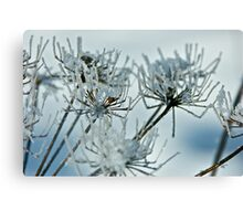 Winter diamonds. by Brown Sugar . Views (403)  favorited by (1) thank you !Thank you friends ! Canvas Print