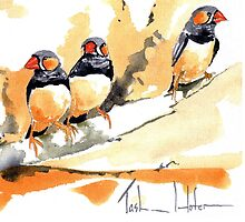 Zebra Finches on a branch by TASHHOFER