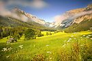 Summer meadow in the alps by Delfino