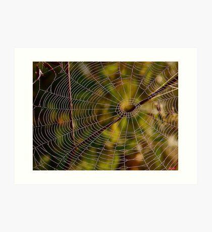 A spider cobweb. by Brown Sugar , wiews (198) thanks ! Art Print