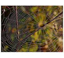 A spider cobweb. by Brown Sugar , wiews (198) thanks ! Photographic Print
