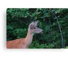 Deer Lady....! Canvas Print