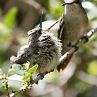 Momma Costa's hummingbird with young by Bluecornstudios