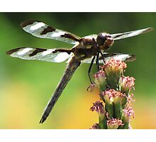Beauty of the Dragon Photographic Print
