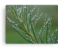Larch and silver drops. Views (153) by Brown Sugar . Canvas Print