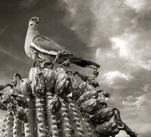 Cactus Dove by Sue  Cullumber