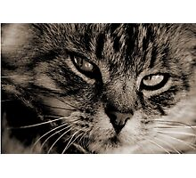 LE CHAT Photographic Print