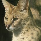 Sweet Serval by Debby Chadwick