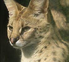 Sweet Serval by Profo Folia