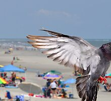 Flying Pigeon over Beach by imagetj
