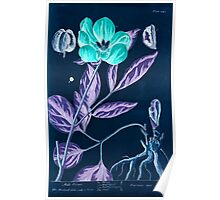A curious herbal Elisabeth Blackwell John Norse Samuel Harding 1737 0626 Male Piony Peony Inverted Poster