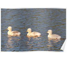 Greenhill Goslings Poster