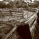 Bush stockyards Marrawah , Tasmania , Australia by phillip wise