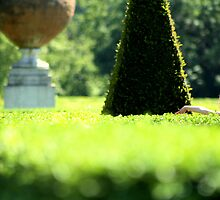 Topiary Garden - Cliveden, Taplow Bukinghamshire England by Carl  Sanjurjo