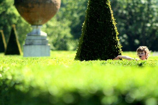 Topiary Garden - Cliveden, Taplow Bukinghamshire England by Carl  Sanjurjo