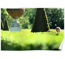 Topiary Garden - Cliveden, Taplow Bukinghamshire England Poster