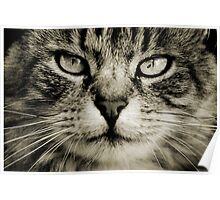 LE CHAT TABBY I Poster