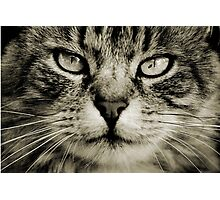 LE CHAT TABBY I Photographic Print