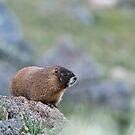 Marmot II by Gary Lengyel