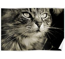 LE CHAT TABBY II Poster
