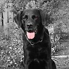 black lab by emanon