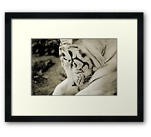 THE WHITE TIGER I Framed Print
