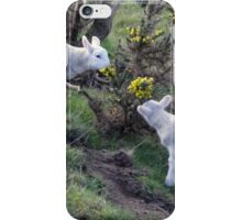 Lambs Puppy Food - Donegal Ireland  iPhone Case/Skin