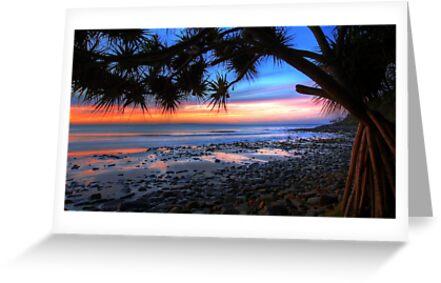 Pandanus Sunset by Adam Gormley