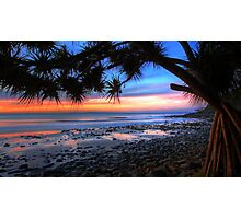 Pandanus Sunset Photographic Print