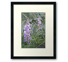 Idaho Lupine1 Framed Print