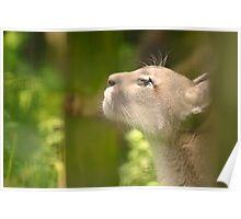 Cougar through the Fences Poster
