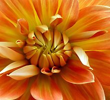 Orange Dahlia by Elaine Bawden