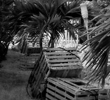 Lobster Traps B&W by Nancee Rainaud