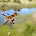 Red Dragonfly by DanAlford