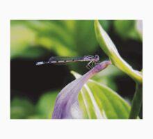 Purple Dragonfly on Purple Flower  Baby Tee