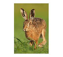 Running Hare Photographic Print