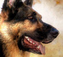 Our Boy Bruzer by Marija