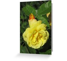 Yellow Rose III Greeting Card