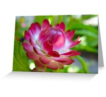 Pink and Blink White Stripes Greeting Card