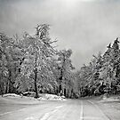 Winter White by Lois  Bryan