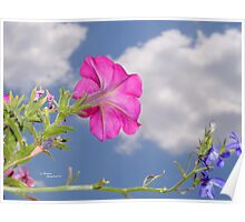 Pink Petunia Flower Clouds Poster