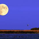 Harvest Moon by Larry Trupp