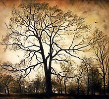 Late Autumn   by Sorin Apostolescu