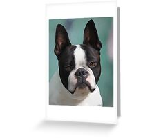 Jack ... Aust CH Loualli Invitation Only .. ♥ Greeting Card